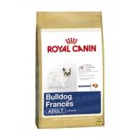 Bulldog Francês Adult